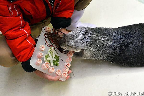 誕生日プレゼント「イセエビケーキ」をもらうメイ