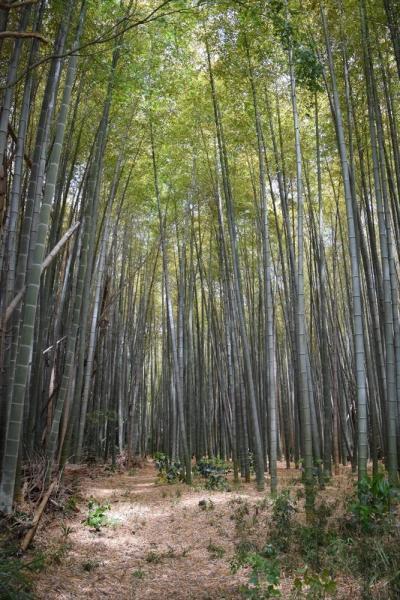 埼玉県にあるうっそうとした竹やぶに3億円以上の価値がついている