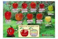 こちらが話題の「りんご下敷き」(表)