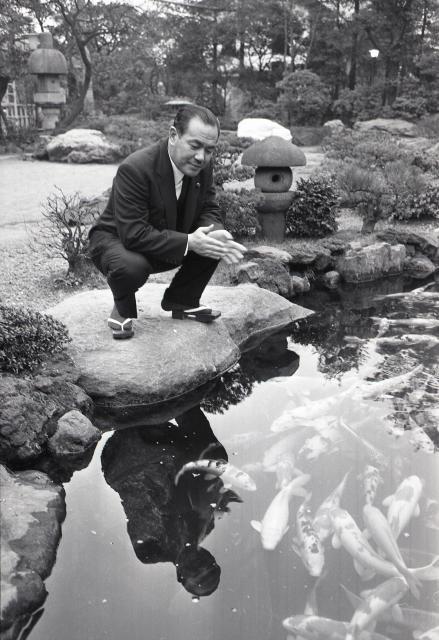 自宅で池のコイを呼ぶ田中角栄氏=1964年12月27日
