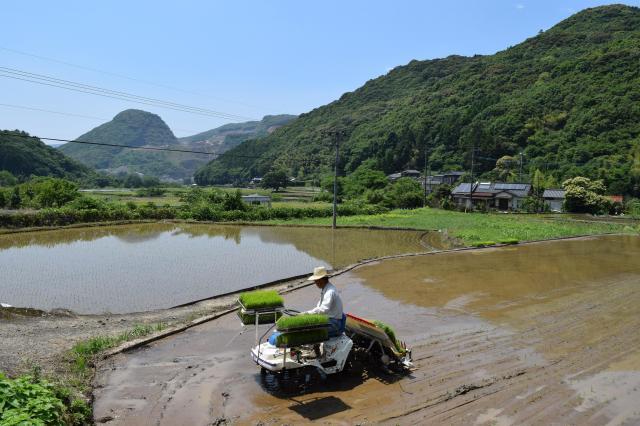6月上旬に訪れた川原地区では、田植えが行われていた=長崎県川棚町