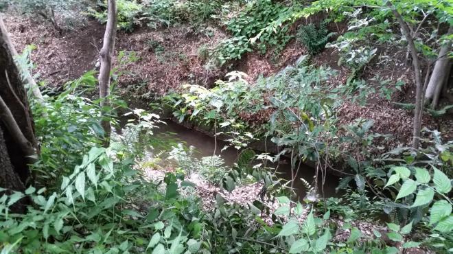 太宰の遺体が発見された付近の玉川上水。いま流れているのは下水の再生水で水流は穏やか=6月、三鷹市牟礼