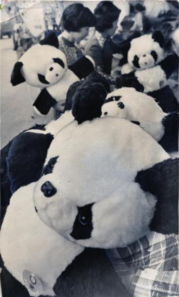 日中国交回復を記念して中国からジャイアント・パンダの「カンカン」と「ランラン」が贈られることが決まると、2頭の来日前から日本のパンダブームは急上昇=1972年11月11日