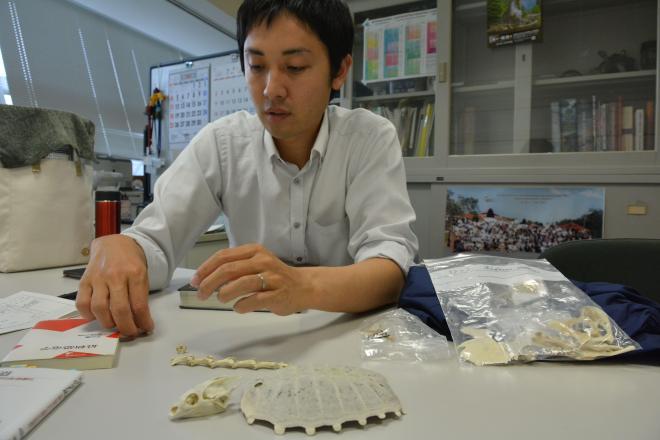 スッポンの骨=福井県立恐竜博物館