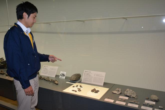 福井県立恐竜博物館のカメの展示コーナーは控えめ