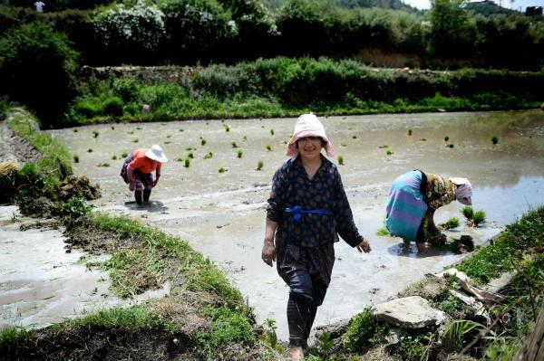 田植えは女性たちの仕事で、近所の人たちと協力して行う。作業中は歌声や話し声が絶えない=2017年6月5日、ブータン・パロ、北村玲奈撮影