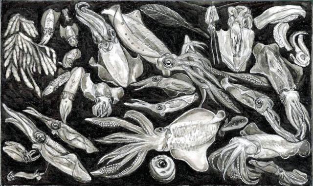 アオリイカの一生を描いた作品で、9月末までギリシャのクレタ水族館で展示されている。黒いところはイカ墨で、白いところはコウイカの貝殻の甲の硬い部分を粉末にしてにかわで練って作った絵の具で、描いたそう=宮内さん提供