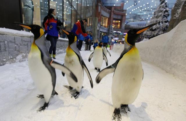 「常夏」のドバイだが、スキー場を設けるショッピングモールもある=2012年2月1日