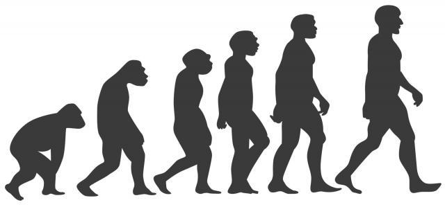 サルは、道具を使ったことで脳が発達して、人に進化した。