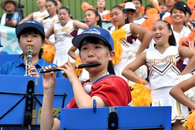 栃木大会で応援する作新学園の生徒=2017年7月22日、朝日新聞
