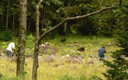 推定1歳の若グマ2頭に接近して撮影するカメラマン。知床ではヒグマの人馴れが進んでいると同時に、人のヒグマ慣れも問題になりつつあるそうです