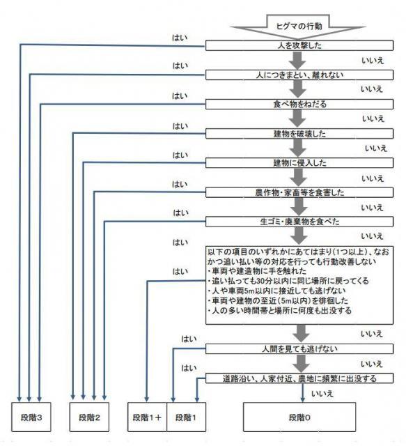 危険度の高いヒグマとそうでないヒグマを区別するために、出没したヒグマは段階0~段階3までの4段階の行動段階で分類されます。段階2と段階3が「問題個体」にあたります