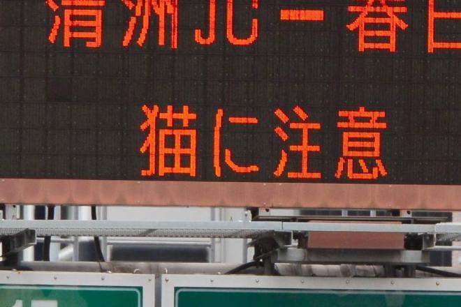 名古屋高速の入り口の情報板に表示された「猫に注意」の表示
