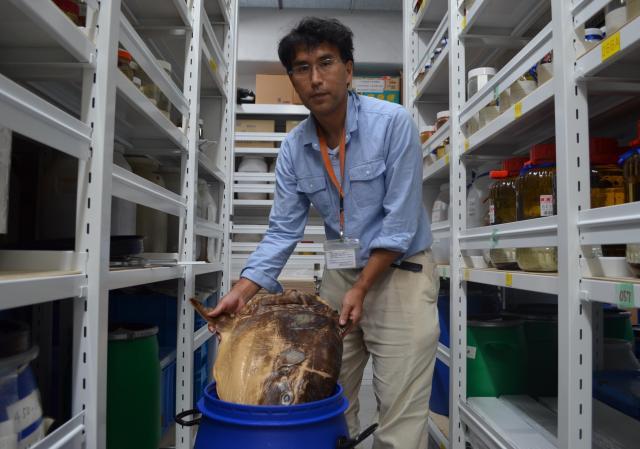 国立科学博物館の篠原現人先生。マンボウの液浸標本を見せてくださいました=茨城県つくば市、野口みな子撮影
