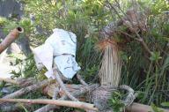 山口の伝統行事「サバー送り」の人形。本当に道ばたにいます=2017年9月7日、山口県下関市豊北町