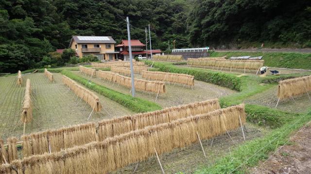 「サバーサマ」「サネモリサマ」が置かれているそばの田は、稲刈りを終えていた=2017年9月15日、山口県下関市豊北町