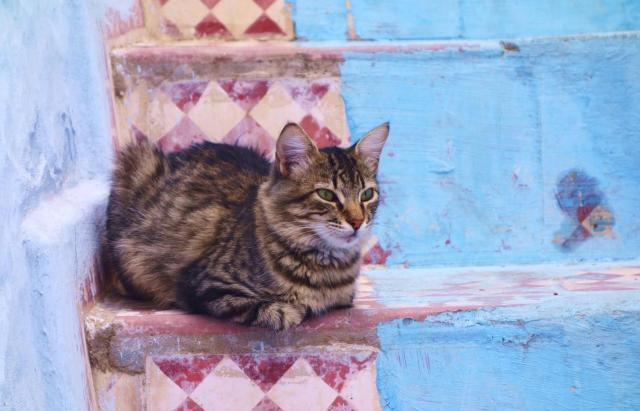 シャウエンの街では猫をよく見かけます。どの猫も気ままで、思わず写真を撮りたくなります