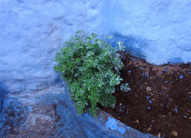 家の脇に映えている植物にも塗料がかかっていました