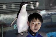 飼育員の肩に乗るペンギン