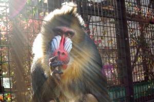 「動物園の動物はオモチャじゃない!」 飼育員の勇気ある掲示に反響