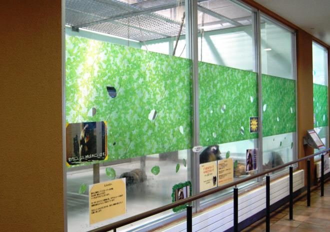 マンドリルが飼育されている施設。キーボーのストレス軽減の為、ガラスにシートを貼って視線を遮るようにしてある