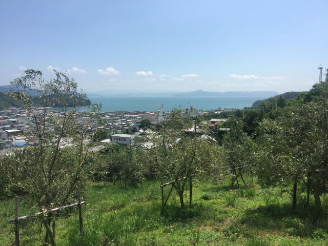 井上誠耕園の海を望む風景