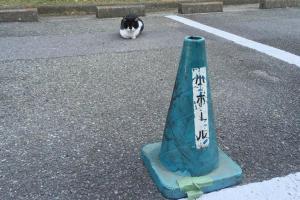 悪質マナーの注意喚起と思いきや… 犯人は猫でした 秀逸なツイート