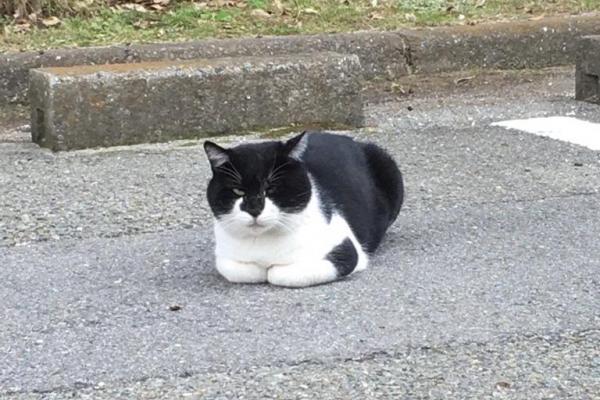関係者専用の駐車場を占拠する猫