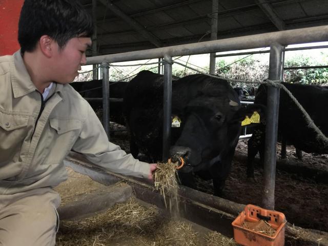 指宿の畜産農家、大川夏樹さんと牛