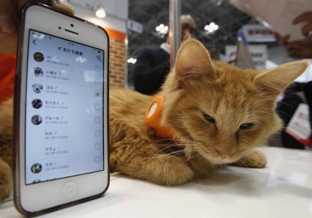 ペット用アプリを実演する猫=ロイター