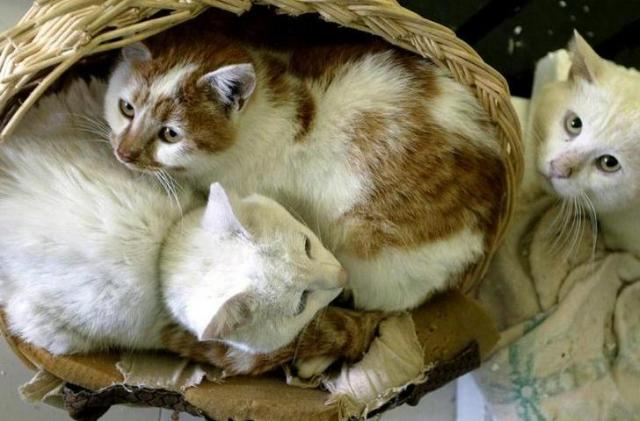 上海のペット協会に保護された野良猫=ロイター