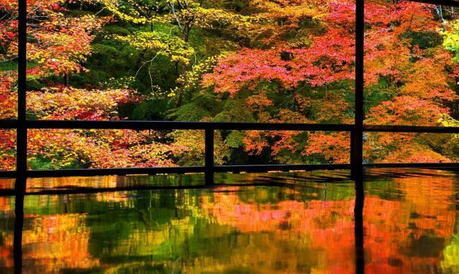 こちらは本物の紅葉。瑠璃光院の書院2階の間では、窓に広がる紅葉が机に映り込んでいた=11月20日、京都市左京区、佐藤慈子撮影(一般公開時間前に撮影)