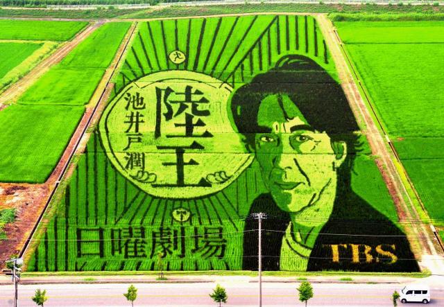 テレビドラマ「陸王」とコラボレーションした田んぼアート=2017年7月28日、行田市小針