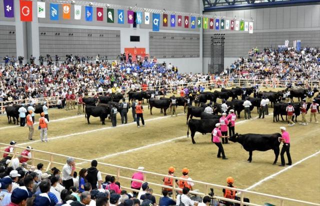 「種牛の部」の審査では農家が手綱を引き、立ち姿、品位などを審査員が見て回った=2017年9月10日、仙台市宮城野区、小出大貴撮影