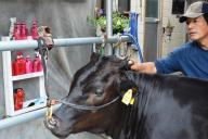 毛にツヤを出すため、人用のシャンプーで体を洗い、前回の全共で優勝した牛の写真と見比べながら仕上げていく=2017年7月28日、宮崎県高千穂町