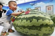 スイカ祭で巨大スイカに手を触れる子ども=中国・北京、ロイター ※記事と写真は関係ありません