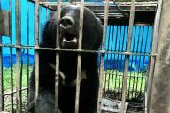 秋田県の横手城南高校側のオリで捕獲されたオスのクマ=横手市提供