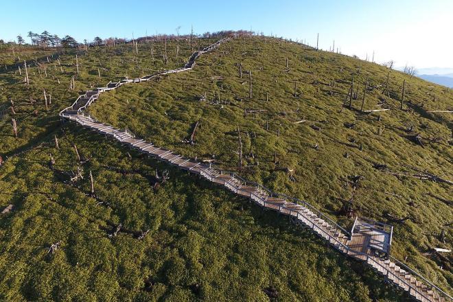 樹木が無くなり笹が繁殖した正木峠=奈良、三重県境の大台ケ原、2017年10月