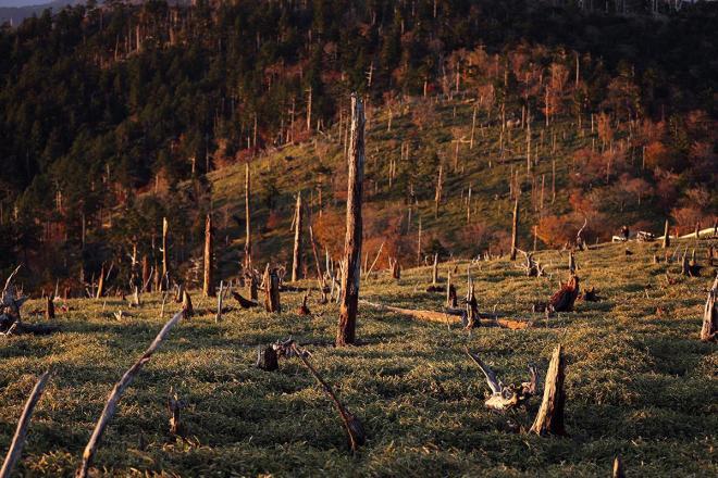 朝日を受けて立ち枯れた樹木が赤く染まる=奈良、三重県境の大台ケ原、2017年10月