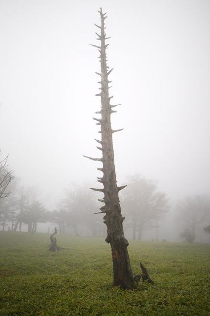 立ち枯れた樹木=奈良県上北山村の大台ケ原、2017年10月