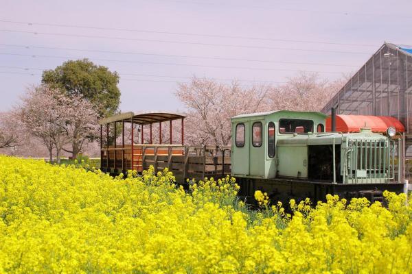 こちらは「成田ゆめ牧場」