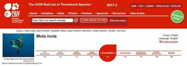 IUCNが公開しているレッドリスト、澤井さんによると左上の写真が「ウシマンボウ」だそう
