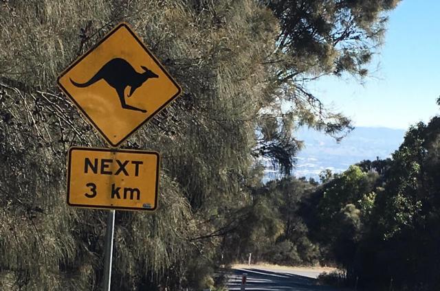 オーストラリアの首都キャンベラ近郊にあった「カンガルーに注意」の標識