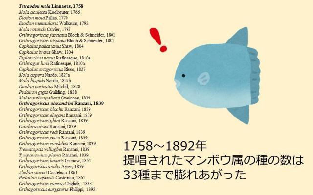 提唱されたマンボウ属の種の数は33種まで膨れあがった(澤井さん提供の資料をもとに作成)