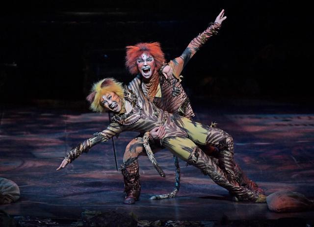 猫たちの表情も生き生き。「人生は生きるに値する」が、劇団四季のメッセージだ。「キャッツ」大阪公演より=遠藤真梨撮影