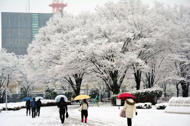 雪に覆われた木々の下を、足元を気にしながら出勤する人たち=2018年2月2日、所沢市