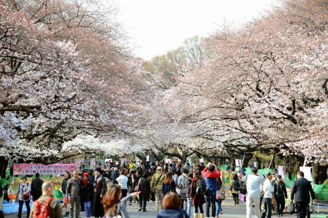 上野公園の桜=2014年3月29日