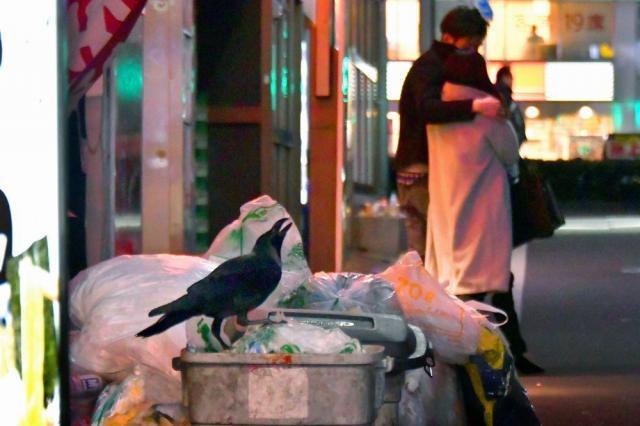 早朝の2人。空が薄明るくなる頃、飲食店のゴミ箱をあさるカラス。傍らをカップルが通り過ぎて行った=東京都新宿区歌舞伎町1丁目