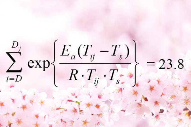 """桜の開花予想、国が認めた""""魔法の公式""""とは?"""