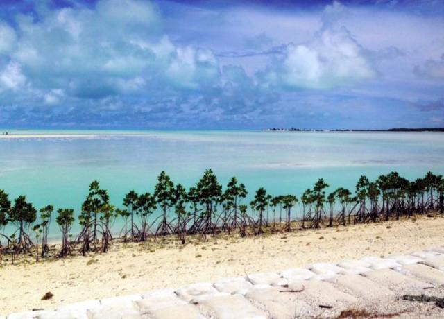 キリバスでは砂地の流出を防ぐため、マングローブの木の植林プロジェクトが進められている=2015年4月30日、郷富佐子撮影